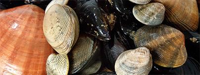 home_shells