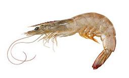 home_crustaceans